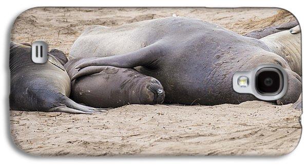 Ano Nuevo Galaxy S4 Cases - Elephant Seals Galaxy S4 Case by Curt Lerner