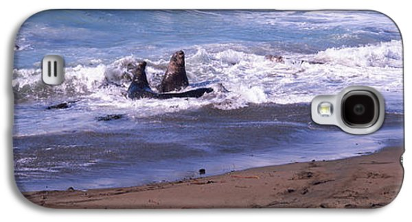 Elephant Seals Galaxy S4 Cases - Elephant Seals In The Sea, San Luis Galaxy S4 Case by Panoramic Images