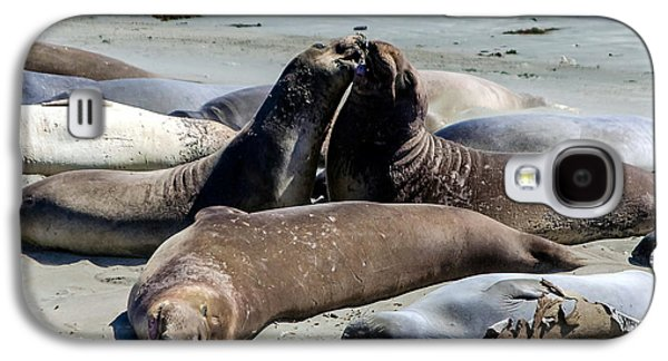 Elephant Seals Galaxy S4 Cases - Elephant Seals Galaxy S4 Case by Mike Ronnebeck