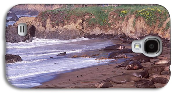 Elephant Seals Galaxy S4 Cases - Elephant Seals On The Beach, San Luis Galaxy S4 Case by Panoramic Images