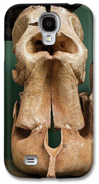 Elephant Skull Cyclops Fossil Myth Galaxy S4 Case by Paul D Stewart