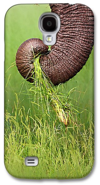 Close Galaxy S4 Cases - Elephant trunk pulling grass Galaxy S4 Case by Johan Swanepoel
