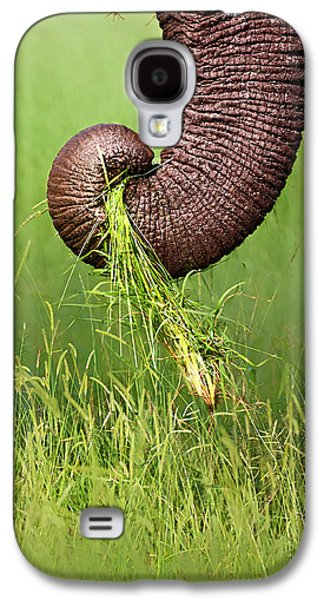 Close Photographs Galaxy S4 Cases - Elephant trunk pulling grass Galaxy S4 Case by Johan Swanepoel