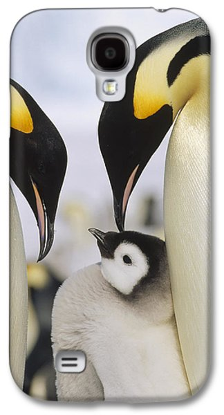 Three Chicks Galaxy S4 Cases - Emperor Penguin Parents With Chick Galaxy S4 Case by Konrad Wothe