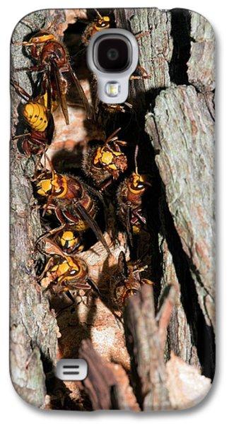 European Hornets Guarding Nest Galaxy S4 Case by Dr. John Brackenbury