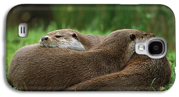 European River Otter Lutra Lutra Galaxy S4 Case by Ingo Arndt