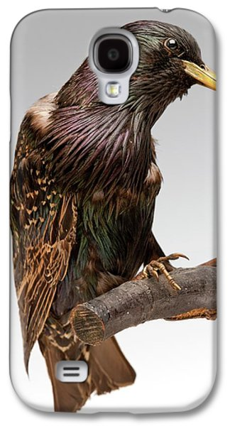 European Starling Galaxy S4 Case by Ucl, Grant Museum Of Zoology