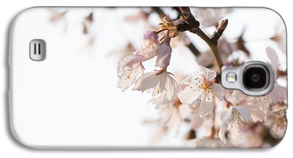 Rosaceae Galaxy S4 Cases - Evening Cherry Blossom Galaxy S4 Case by Anne Gilbert