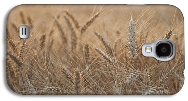 Consumerproduct Galaxy S4 Cases - Evening Wheat Galaxy S4 Case by Nomad Art And  Design