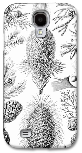 Examples Of Coniferae From Kunstformen Galaxy S4 Case by Ernst Haeckel