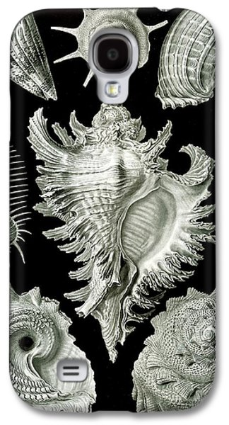 Genus Galaxy S4 Cases - Examples of Prosranchia Galaxy S4 Case by Ernst Haeckel
