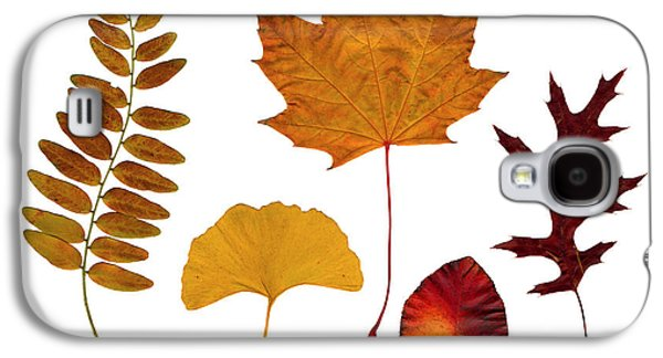 Brown Tones Galaxy S4 Cases - Fall leaves Galaxy S4 Case by Tony Cordoza
