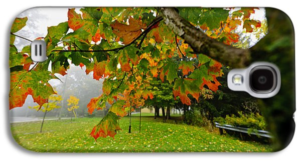 Maple Season Galaxy S4 Cases - Fall maple tree in foggy park Galaxy S4 Case by Elena Elisseeva