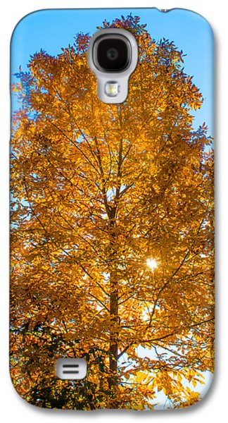 Fall Trees Fall Color Galaxy S4 Cases - Fall Tree Galaxy S4 Case by Parker Cunningham