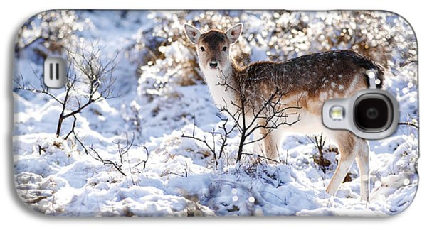 Snow Scenes Galaxy S4 Cases - Fallow Deer in Winter Wonderland Galaxy S4 Case by Roeselien Raimond