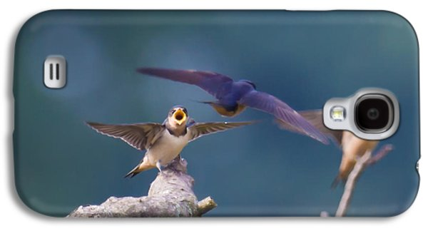 Swallow Chicks Galaxy S4 Cases - Feed me Galaxy S4 Case by Davidmark Images