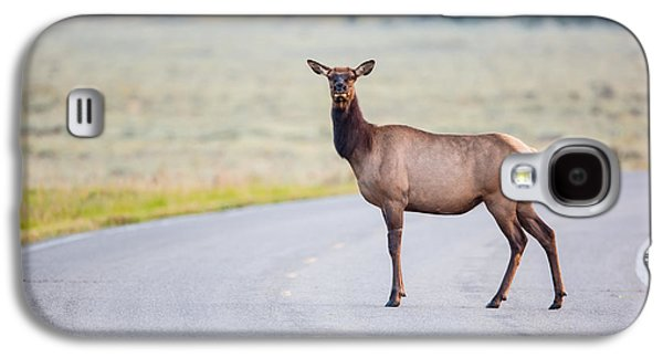 Female Photographs Galaxy S4 Cases - Female Elk Crossing the Road at Yellowstone Galaxy S4 Case by Andres Leon