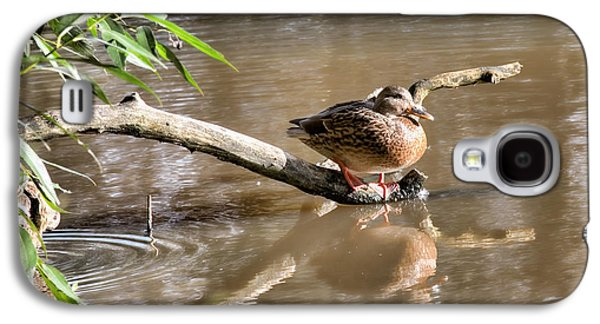 Trees Reflecting In Creek Galaxy S4 Cases - Female mallard duck sitting on a log near  and reflected in water Galaxy S4 Case by Leif Sohlman