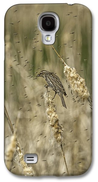 Emergence Galaxy S4 Cases - Female Red-winged Black Bird Feeding Galaxy S4 Case by Thomas Young