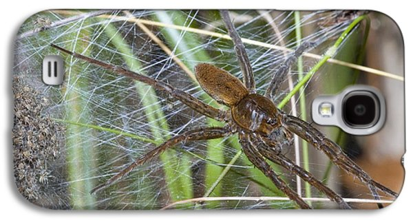 Fens Galaxy S4 Cases - Fen Raft Spider And Young Galaxy S4 Case by Martyn F. Chillmaid
