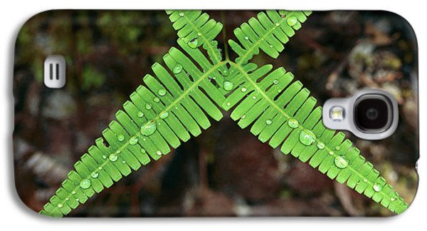 Symetry Galaxy S4 Cases - Fern With Water Drops Galaxy S4 Case by Thomas Marent