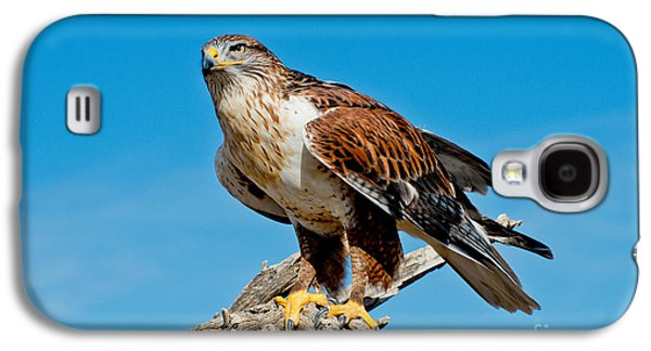 Us Wildllife Galaxy S4 Cases - Ferruginous Hawk About To Take Galaxy S4 Case by Anthony Mercieca