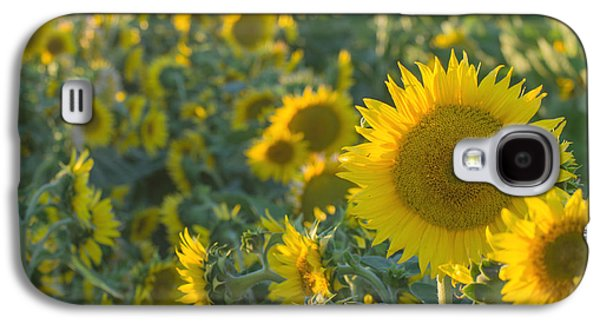 Sunflower Patch Galaxy S4 Cases - Field of happiness Galaxy S4 Case by Rima Biswas