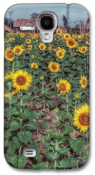 Stigma Galaxy S4 Cases - Field of Sunflowers Galaxy S4 Case by Adrian Evans