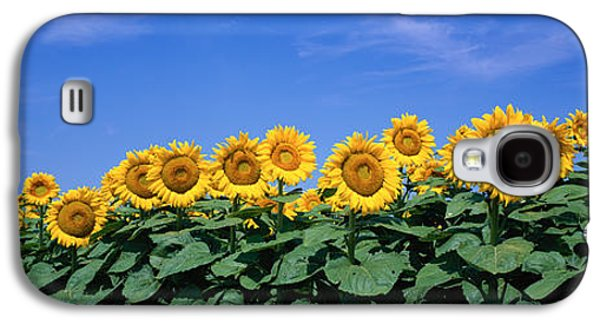 Sunflower Field Galaxy S4 Cases - Field Of Sunflowers, Bogue, Kansas, Usa Galaxy S4 Case by Panoramic Images
