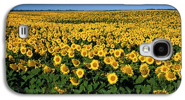 Sunflower Field Galaxy S4 Cases - Field Of Sunflowers Nd Usa Galaxy S4 Case by Panoramic Images