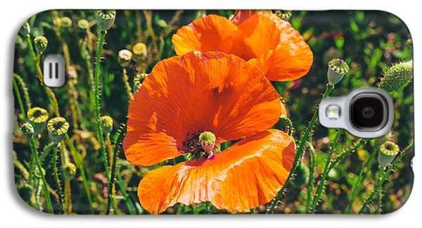 A Sunny Morning Galaxy S4 Cases - Field Poppies Galaxy S4 Case by Nomad Art And  Design