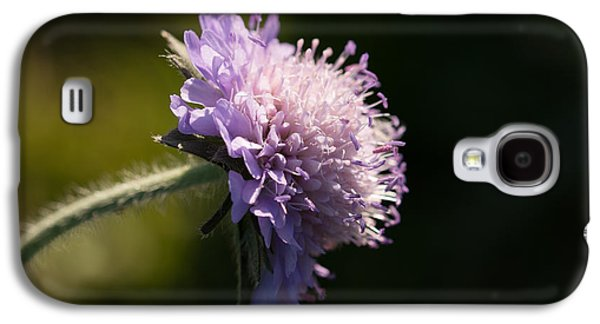 Macro Photographs Galaxy S4 Cases - Field Scabious Galaxy S4 Case by Robert Carr