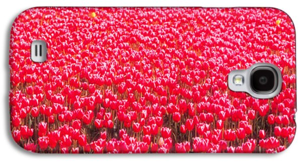 Fushia Galaxy S4 Cases - Fields Of Tulips Alkmaar Vicinity Galaxy S4 Case by Panoramic Images