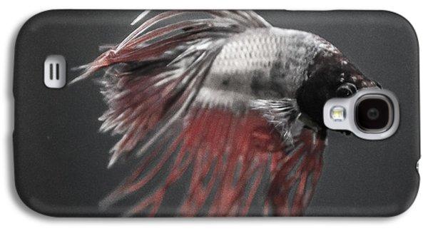 Betta Galaxy S4 Cases - Fighting Fish Galaxy S4 Case by Lisa Brandel