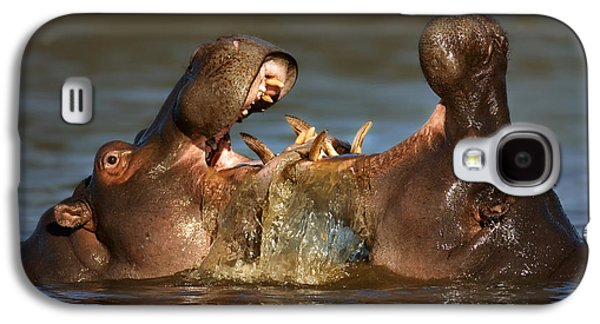 Display Galaxy S4 Cases - Fighting Hippos Galaxy S4 Case by Johan Swanepoel