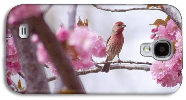 Wild Orchards Galaxy S4 Cases - Finch Frame Galaxy S4 Case by Andrea Goodrich