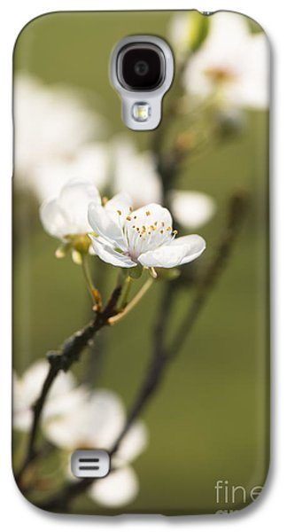 Rosaceae Galaxy S4 Cases - First Signs of Spring Galaxy S4 Case by Anne Gilbert