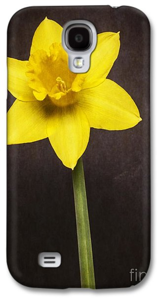 Bulb Galaxy S4 Cases - First Spring Daffodil Galaxy S4 Case by Edward Fielding