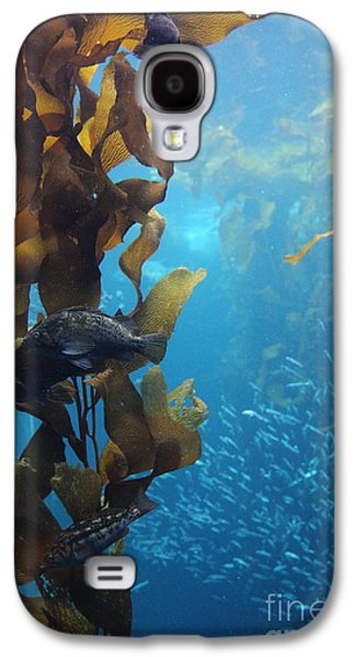 Schools Of Fish Galaxy S4 Cases - Fish Hiding In Kelp On The Ocean Floor 5D24849 Galaxy S4 Case by Wingsdomain Art and Photography