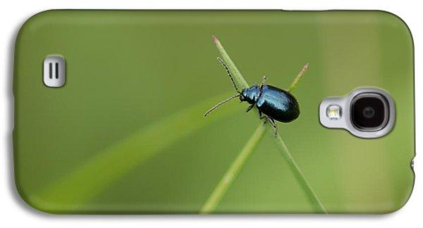 Fauna Photographs Galaxy S4 Cases - Flea Beetle Galaxy S4 Case by Robert Carr