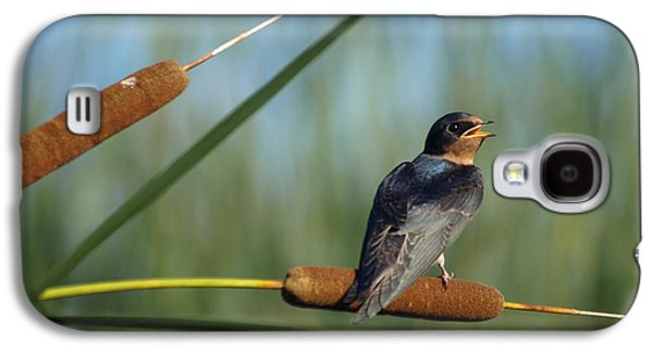 Swallow Chicks Galaxy S4 Cases - Fledgling Barn Swallow Galaxy S4 Case by James Peterson