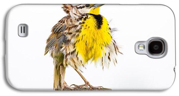 Flluffy Meadowlark Galaxy S4 Case by Bill Swindaman