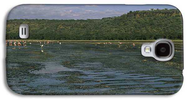 Alga Galaxy S4 Cases - Flock Of Flamingos In A Lake, Lake Galaxy S4 Case by Panoramic Images
