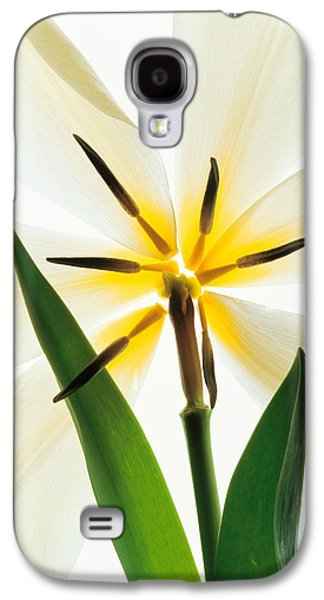 Designs In Nature Galaxy S4 Cases - Flower Head, Lily Galaxy S4 Case by Panoramic Images