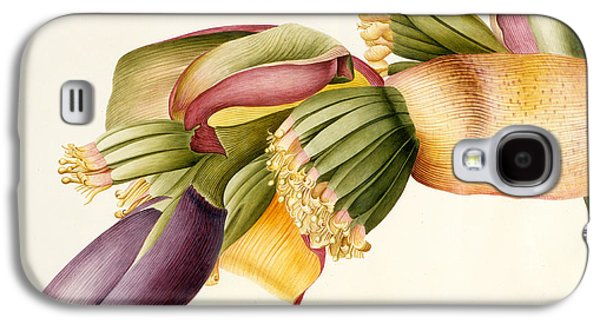 Flower Of The Banana Tree  Galaxy S4 Case by Georg Dionysius Ehret