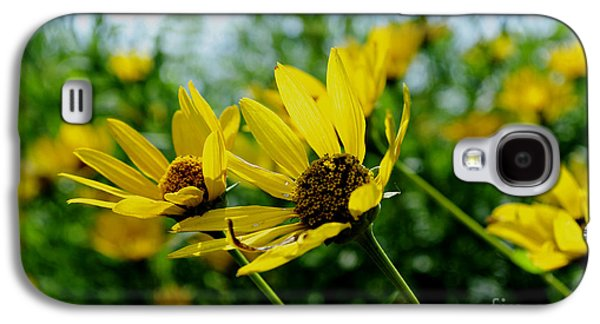 Sunflower Patch Galaxy S4 Cases - Flower - Sunning Sunflowers - Luther Fine Art Galaxy S4 Case by Luther  Fine Art