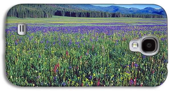 Idaho Photographs Galaxy S4 Cases - Flowers In A Field, Salmon, Idaho, Usa Galaxy S4 Case by Panoramic Images
