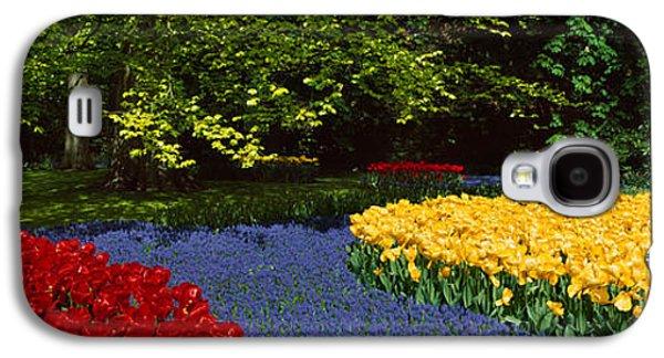 Garden Scene Galaxy S4 Cases - Flowers In A Garden, Keukenhof Gardens Galaxy S4 Case by Panoramic Images