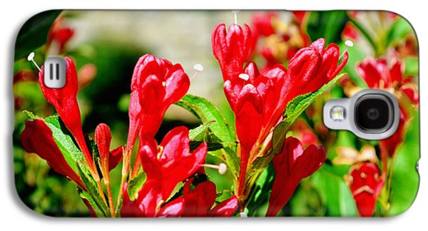 Becky Digital Art Galaxy S4 Cases - Flowers -  Red Beauties - Luther Fine Art Galaxy S4 Case by Luther Fine Art