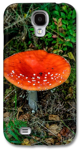 Toadstools Galaxy S4 Cases - Fly Agaric Fungi Galaxy S4 Case by Adrian Evans